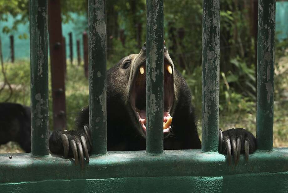 Lindsay Lohan isn't the only one rehabbing these days: A bear recovers from mistreatment at the Wildlife 