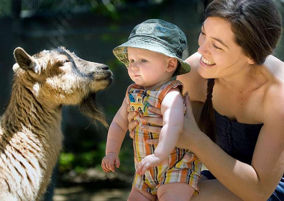 Sorry, I'm not that kind of nanny: To celebrate their first Mother's Day together, Karissa Kompa introduces son Kaden, 7 months, to a goat at Irvine Regional Park's petting zoo in Orange, Calif. Photo: Mindy Schauer, Associated Press