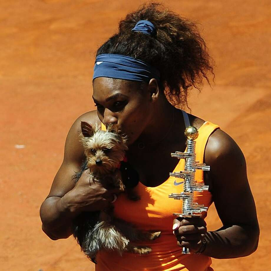 Love match:Serena Williams holds her trophy and kisses her Yorkie after winning the women's singles final against Maria Sharapova at the Madrid Masters. Photo: Dominique Faget, AFP/Getty Images