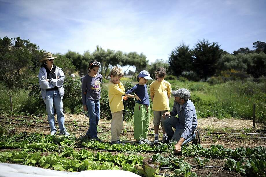 Top: Frances White (left) and kids Ursula Oddo-White, Eero Kennedy, Leda Oddo-White and Ava Kennedy get a lesson in weeding from Jason Mark at the 4-acre Alemany Farm in S.F. Bottom: Strawberries. Photo: Michael Short, Special To The Chronicle