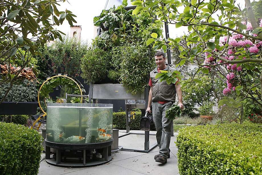 Doug Millar, chief scientist for Inka Biospheric Systems, maintains an aquaponic garden at a home in San Francisco's Pacific Heights. Photo: Liz Hafalia, The Chronicle