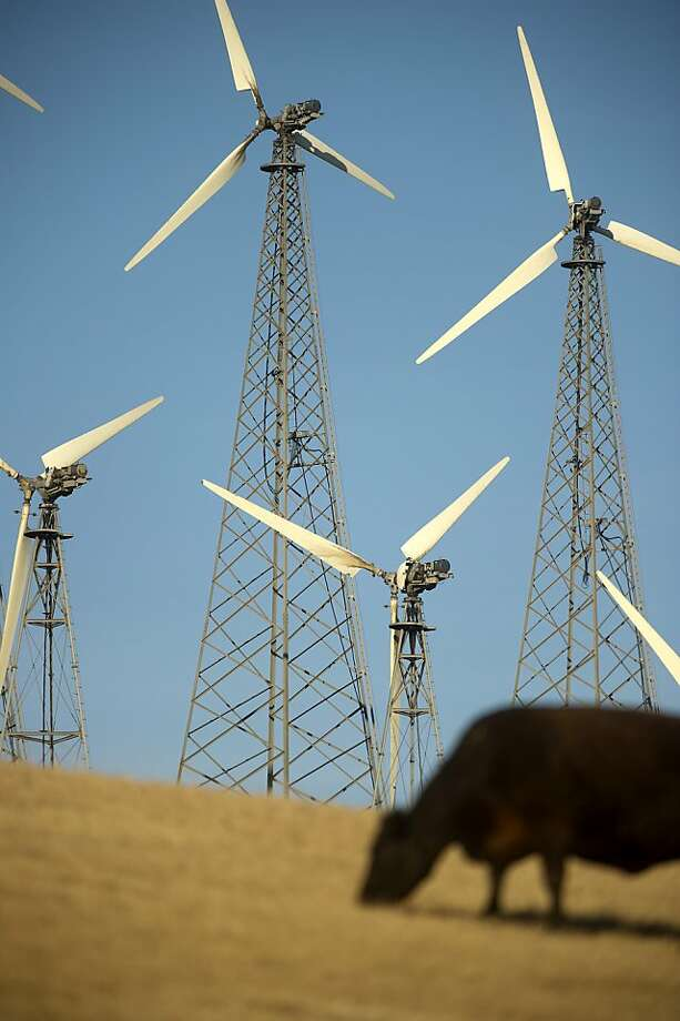 A cow grazes near windmills in the Altamont Pass on Sunday, May 12, 2013, near Livermore, Calif. Critics say that wind farms, a cornerstone of President Barack Obama's energy plan, kill thousands of birds every year. (AP Photo/Noah Berger) Photo: Noah Berger, Associated Press