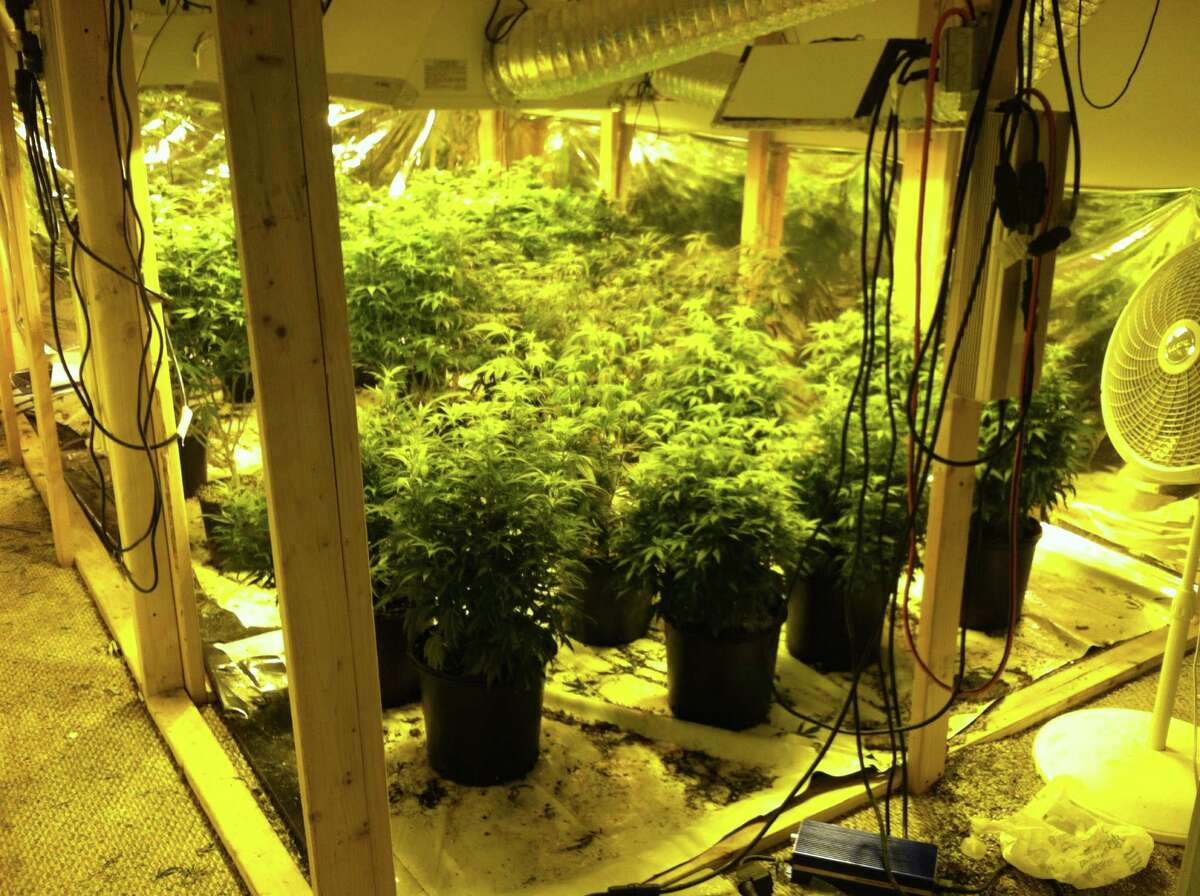 Law enforcement officers seized about 300 marijuana plants inside home in northeast Harris County Monday night.