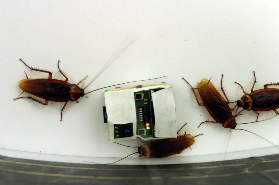 You know the sound a Texas roach makes crawling across the floor. --Joy Sewing / Houston Chronicle Photo: NYT / NYTNS