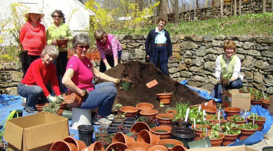 Members of the Greens Farms Garden Club gathered to separate and pot perenniel plants from a member's garden for sale at the club's May 18 plant sale on the Sherman Green. Photo: Contributed Photo / Fairfield Citizen contributed
