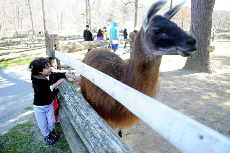 The Stamford Museum and Nature Center hosts its Spring on the Farm Festival Weekend on Saturday and Sunday, May 18 and 19. Photo: Lindsay Niegelberg / Stamford Advocate
