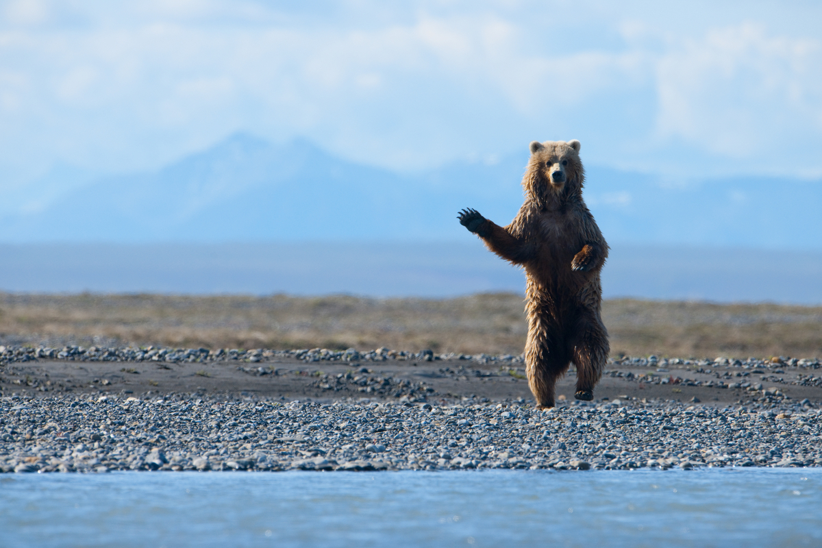 A last-ditch bid to keep Big Oil out of Arctic Wildlife Refuge