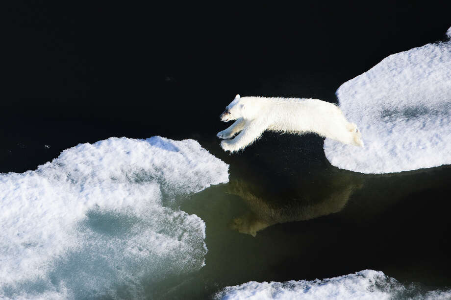 A polar bear jumps from one ice flow to another in the thinning Arctic ice pack off Alaska. Photo: Florian Schulz, Visionsofthewild.com / (C) Florian Schulz / visionsofthewild.com