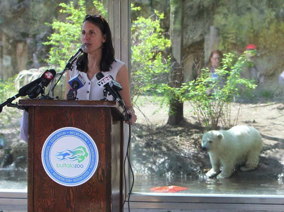 Buffalo Zoo President, Donna Fernandez opens a press conference that was held, Wednesday, May 15, 2013 in front of the exhibit holding the polar bear cub, Luna, to announce the arrival of Kali, the orphaned cub  found in Alaska.  The 65 pound male polar bear was shipped via UPS from the Alaska Zoo.  He was not yet available for viewing and will be introduced to Luna in a few weeks. Photo: Sharon Cantillon, Associated Press / The Buffalo News