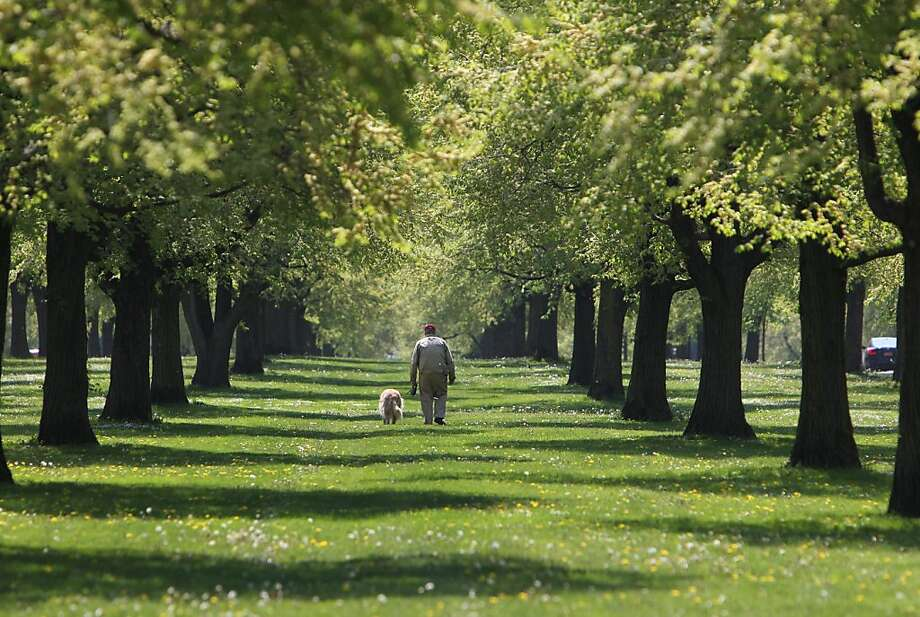 Stan Cheyney of Buffalo, N.Y., takes his golden retriever Hobby on a walk in the green space along Chapin Parkway, in Buffalo, N.Y., Wednesday, May 15, 2013. (AP Photo/The Buffalo News, Sharon Cantillon) Photo: Sharon Cantillon, Associated Press
