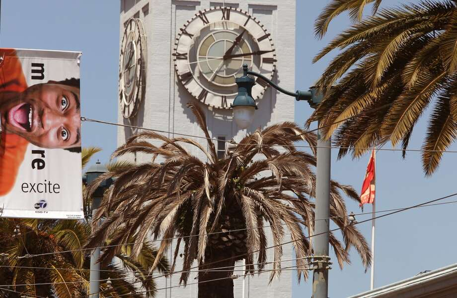 A Fusarium-infected palm tree tagged for removal on the Embarcadero near the Ferry building in San Francisco, Calif., on Tuesday, May 14, 2013.  Several palm trees along the Embarcadero are suffering from a tree fungus disease that is slowly killing them.