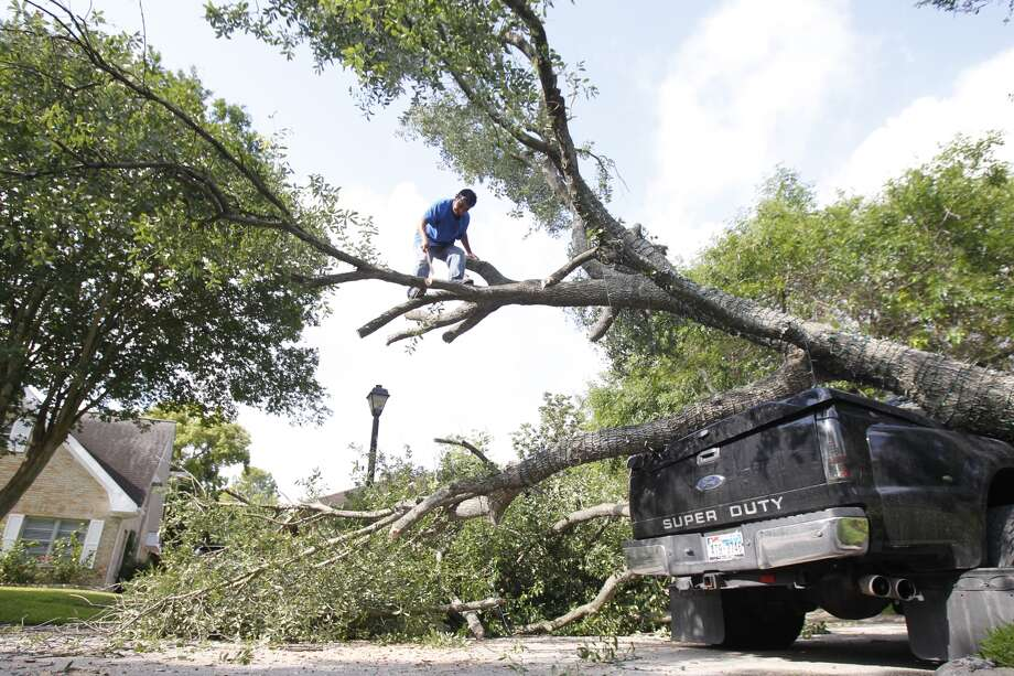 Carlos Calel inspects a tree that had fallen on his boss' truck, May 16.