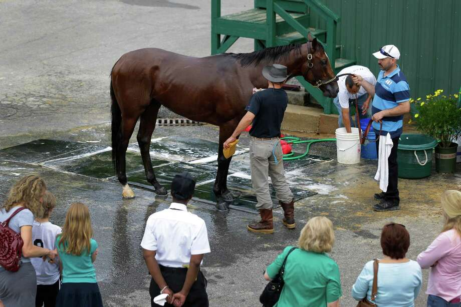 Spectators look on as grooms wash Goldencents after a workout at Pimlico Race Course in Baltimore, Thursday, May 16, 2013. The Preakness Stakes horse race is scheduled to take place May 18. (AP Photo/Patrick Semansky) Photo: Patrick Semansky, Associated Press / AP