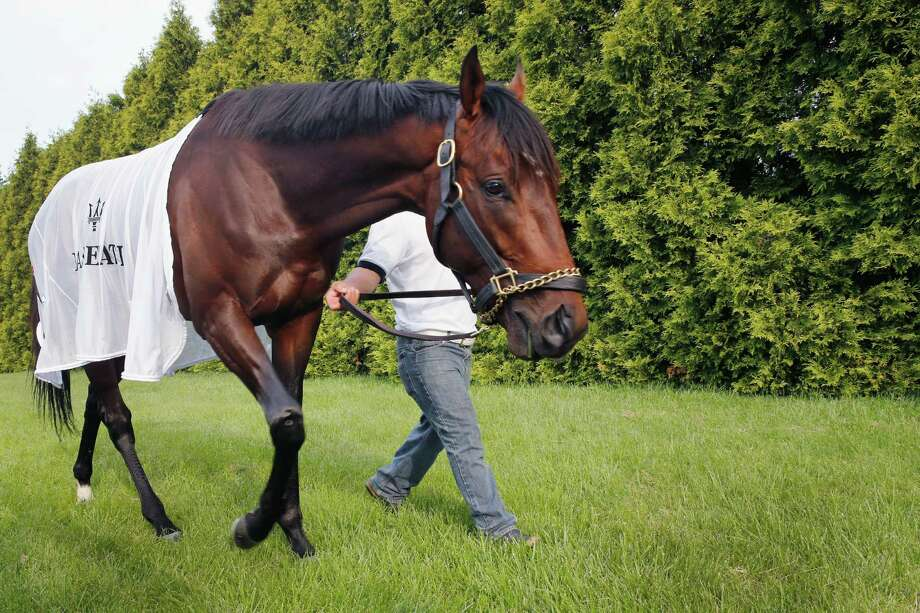Kentucky Derby winner Orb is taken out to graze after a workout in preparation for the Preakness. Photo: Robb Carr / Getty Images