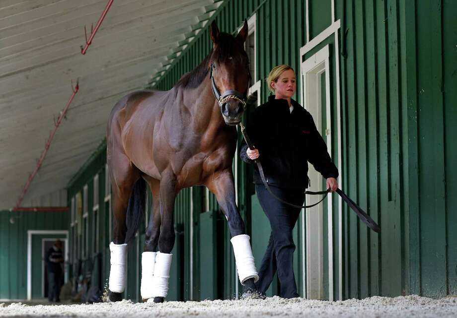 Exercise rider Jennifer Patterson walks Kentucky Derby winner Orb after arriving at Pimlico Race Course in Baltimore, Monday, May 13, 2013. Orb is scheduled to run in the Preakness Stakes on May 18. (AP Photo/Patrick Semansky) Photo: Patrick Semansky