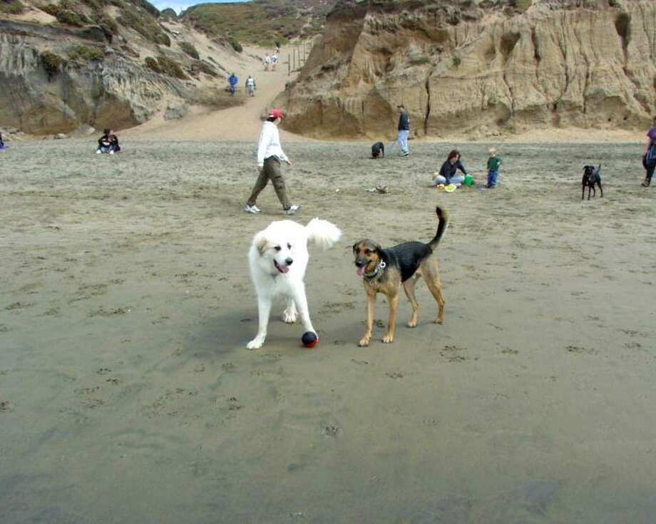 SF dogs enjoying a day at the gorgeous Fort Funston. Photo via DogGoes.com