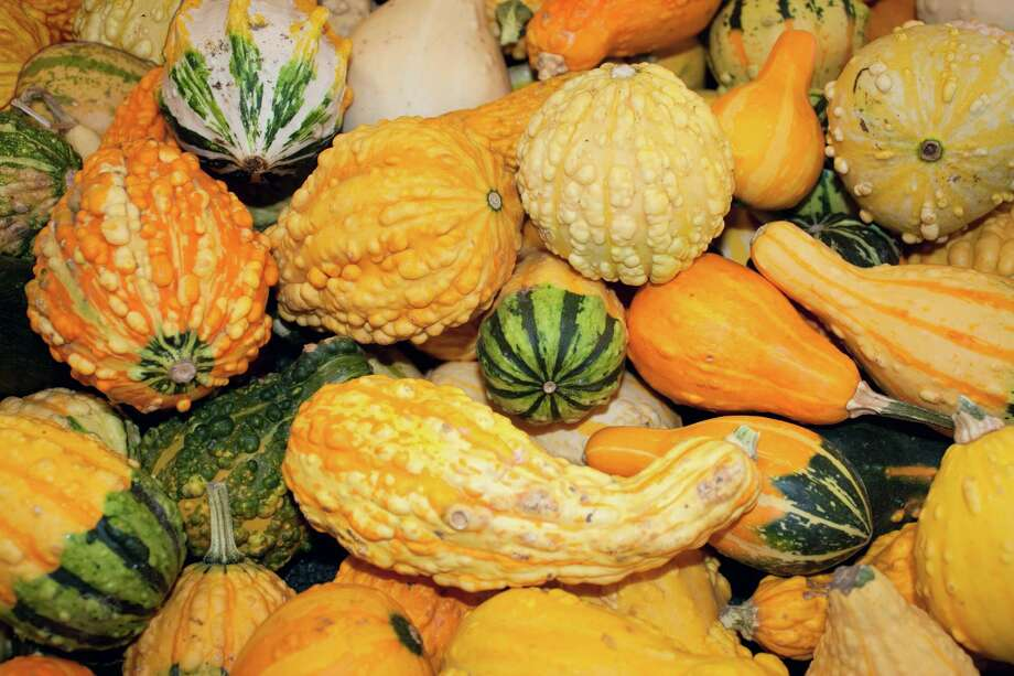 Fall gourds in all shapes, colors and sizes after the harvest. Photo: Stacey Lynn Payne / Copyright Stacey Lynn Payne