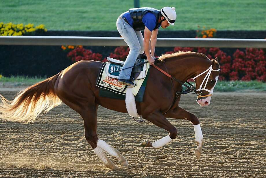 Preakness entrant Will Take Charge goes over the track in preparation for the 138th Preakness Stakes at Pimlico Race Course on May 17, 2013 in Baltimore, Maryland.  Photo: Rob Carr, Getty Images