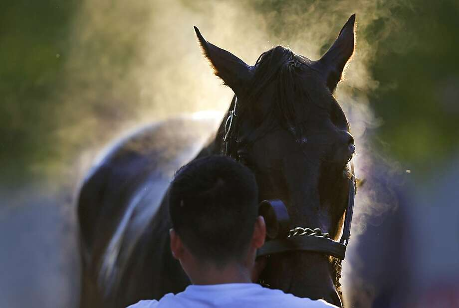 Steam rises from Kentucky Derby winner Orb as a groom washes him after a workout at Pimlico Race Course in Baltimore, Friday, May 17, 2013. The Preakness Stakes horse race is scheduled to take place May 18.  Photo: Patrick Semansky, Associated Press