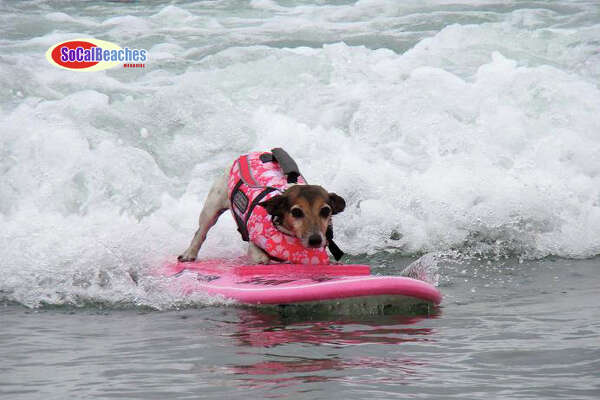 2. San Diego: Here we see dogs surfing, a popular activity in this sunny coastal town. Photo via SoCalBeaches Blog.