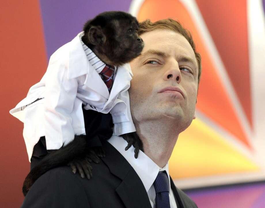 """Animal Practice"" co-stars Crystal the monkey and actor Justin Kirk . (AP Photo/Evan Agostini)"