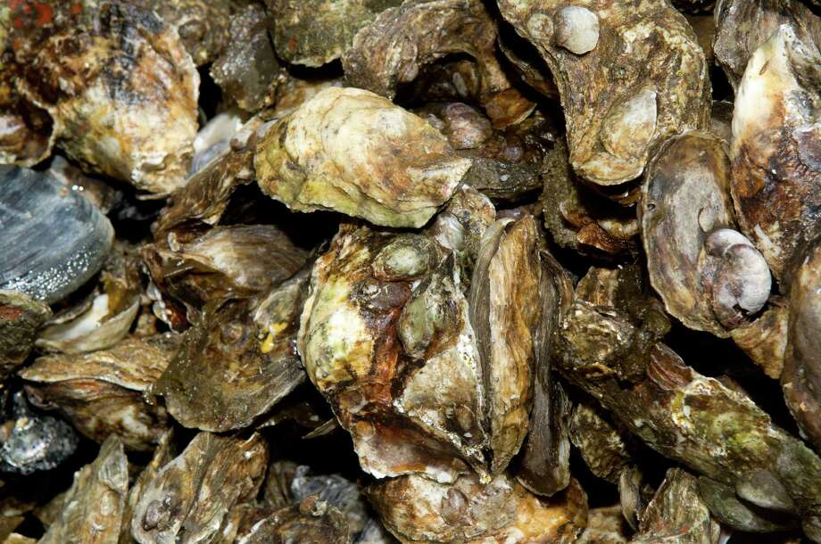 Oysters sit piled on a boat and ready to be unloaded at Norm Bloom and Son in Norwalk, Conn., on Friday, May 17, 2013. Photo: Lindsay Perry / Stamford Advocate