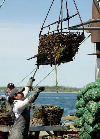 Pricilla Layana helps bring in oysters as they are dredged from the Long Island Sound by Norm Bloom and Son in Norwalk, Conn., on Friday, May 17, 2013. Photo: Lindsay Perry / Stamford Advocate