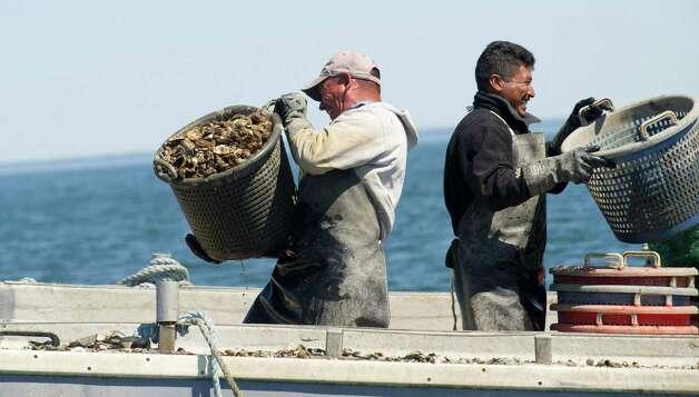 Oscar Garcia, left, and Jose Maldonado, right, carry baskets of oysters on board a boat in the Long Island Sound as they put them aside for storage while dredging for Norm Bloom and Son in Norwalk, Conn., on Friday, May 17, 2013. Photo: Lindsay Perry / Stamford Advocate