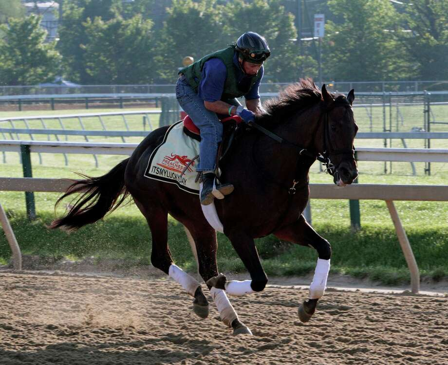 Exercise rider Peter Shelton rides Preakness Stakes entrant Itsmyluckyday as they gallop at Pimlico Race Course Friday, May 17, 2013 in Baltimore. The Preakness Stakes horse race is scheduled for Saturday. (AP Photo/Garry Jones) Photo: Garry Jones