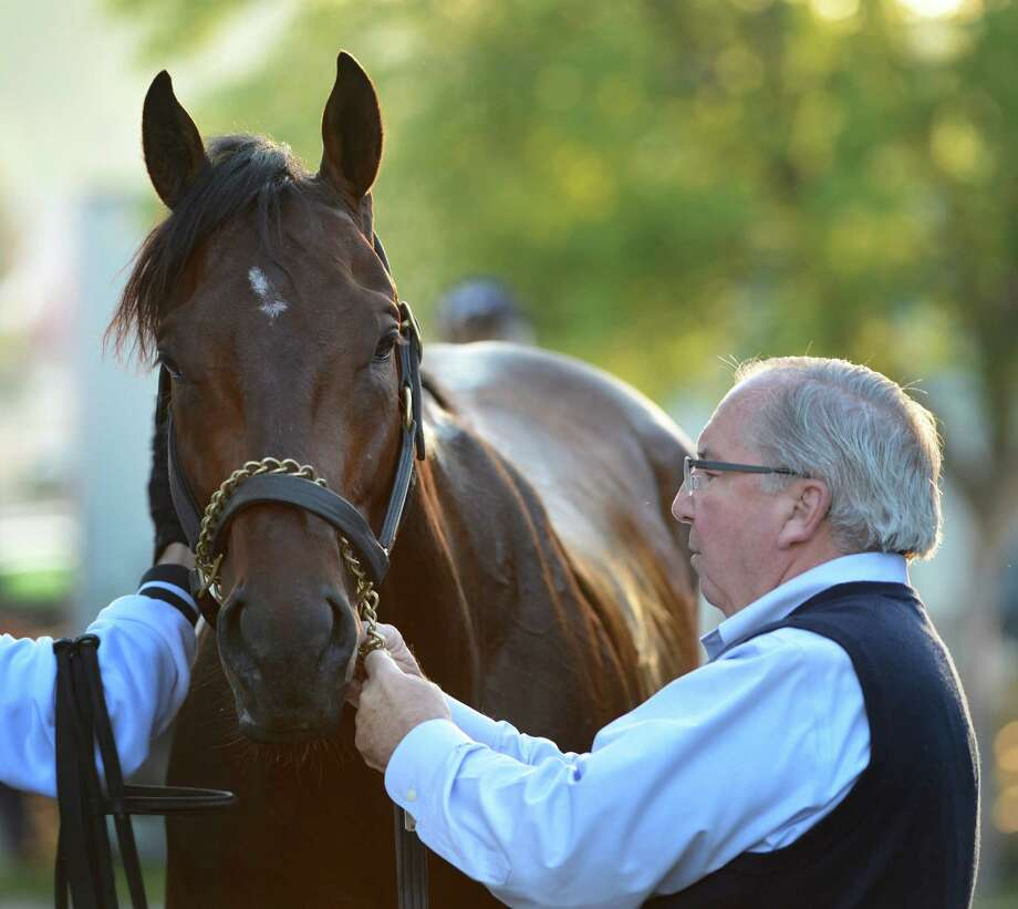 Shug McGaughey  works on his Kentucky Derby winner Orb this morning after his exercise period May 17, 2013 the day before the Preakness the second jewel of the Triple Crown for thoroughbreds to be held Saturday at the Pimlico Race Course in Baltimore, MD.  (Skip Dickstein/Times Union) Photo: SKIP DICKSTEIN