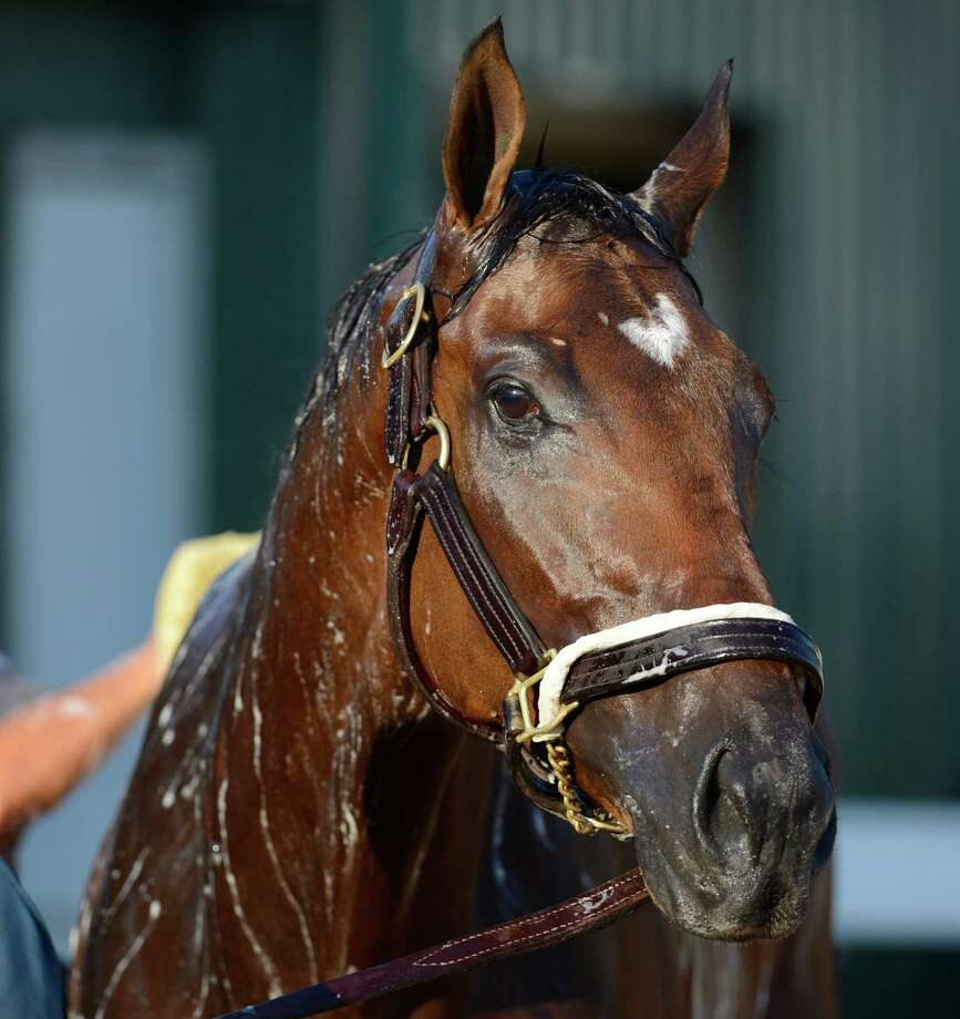 Departing gets his bath May 17, 2013 the day before the Preakness the second jewel of the Triple Crown for thoroughbreds to be held Saturday at the Pimlico Race Course in Baltimore, MD.  (Skip Dickstein/Times Union) Photo: SKIP DICKSTEIN