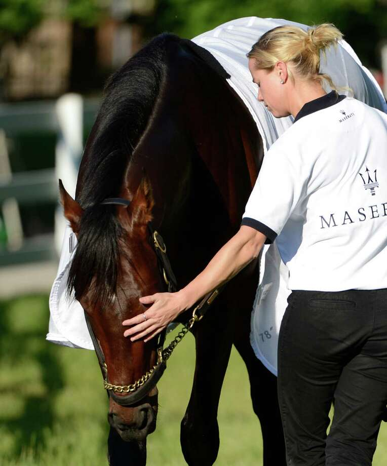 Kentucky Derby winner Orb gets a friendly pat on the head from his regular exercise rider Jennifer Patterson this morning after his exercise period May 17, 2013 the day before the Preakness the second jewel of the Triple Crown for thoroughbreds to be held Saturday at the Pimlico Race Course in Baltimore, MD.  (Skip Dickstein/Times Union) Photo: SKIP DICKSTEIN