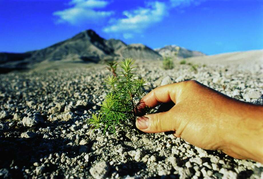 Hand touching plant emerging through volcanic soil. Photo: Rich Frishman, Getty Images / (c) Rich Frishman