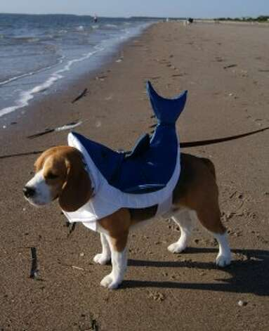 Do I really need this shark suit to look cute?
