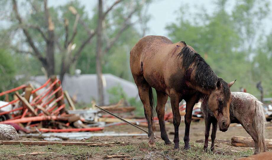 Injured horses huddle together after the tornado hit the area near 149th and Drexel on Monday, May 20, 2013 in Oklahoma City, Okla.  (AP Photo/ The Oklahoman, Chris Landsberger) Photo: CHRIS LANDSBERGER, Associated Press / The Oklahoman