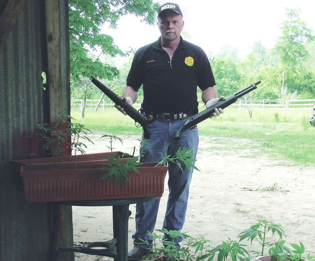 Newton County Sheriff Eddie Shannon with confiscated weapons and marijuana plants. Courtesy Photo