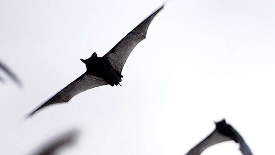 Millions of Mexican free-tailed bats emerge from the Bracken Bat Cave on Saturday, May 18, 2013. Photo: Billy Calzada / San Antonio Express-News