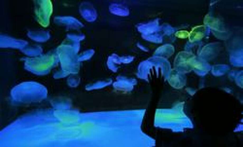 "Kids can get to know some sea creatures at ""Jiggle a Jelly"" at the 