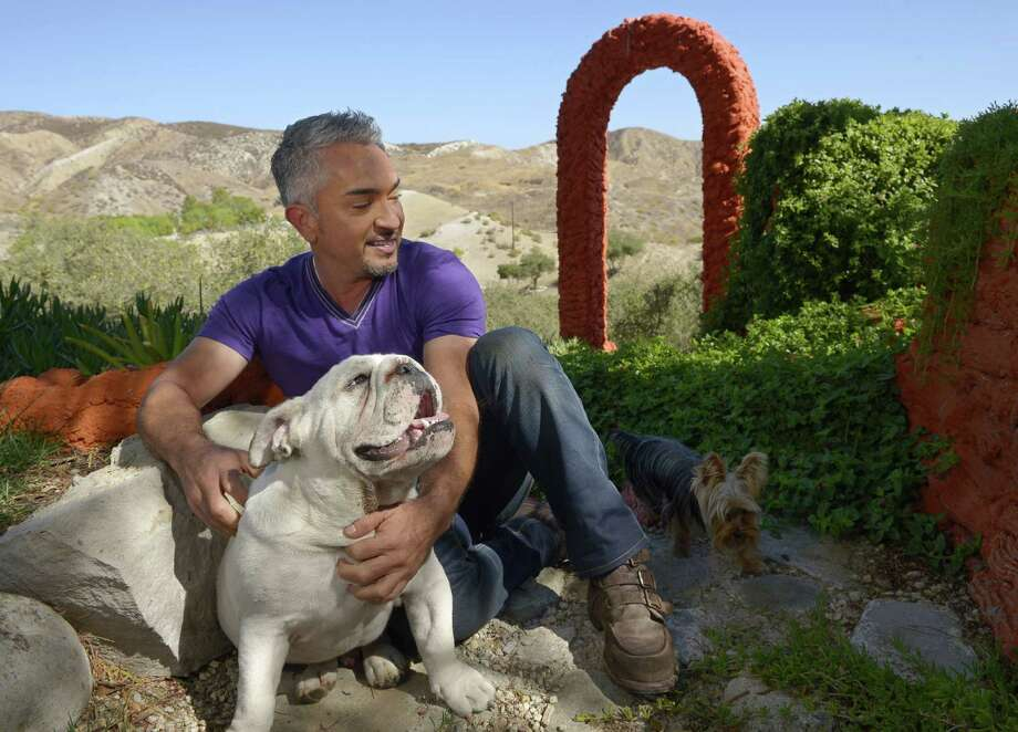 """Dog Whisperer"" Cesar Millan brings his tour to the Lila Cockrell Theatre on Wednesday, May 29. Photo: Associated Press"