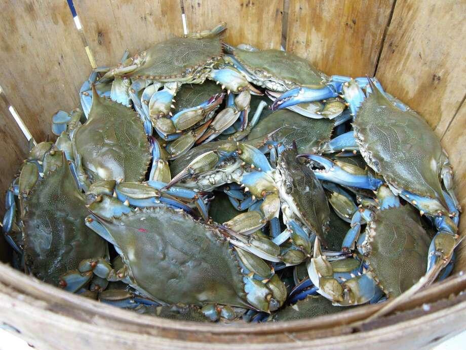 blue crab/fotolia / rouwerkerk - Fotolia