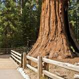 Congress Trail Forgo the General Sherman. The best sequoia grove in Sequoia and Kings Canyon parks stands on the Congress Trail. Don't miss the House and Senate groups. $20/vehicle; nps.gov/seki