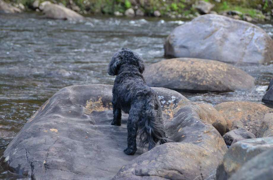 Jasper, Lori Porter's Shih Tzu, seems to be surveying his kingdom as he takes in the beauty of the Cedar River near Indian Lake.