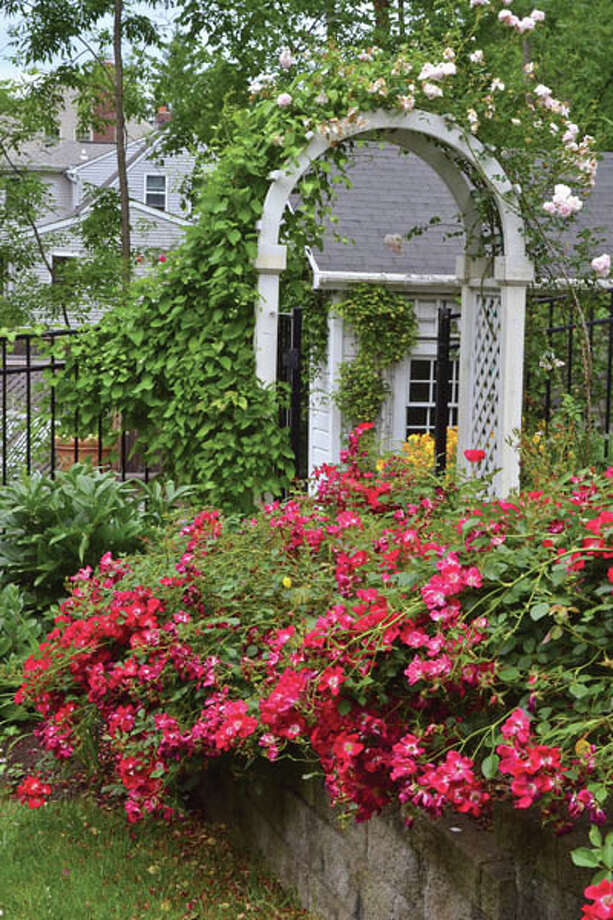 """Gillian loves roses. She recommends varieties like Knockout because they're hardier and more likely to last a New York state winter. Added bonus? """"They bloom all summer, which is what I like,"""" she says."""