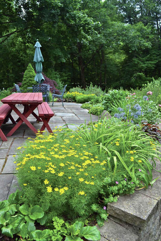 The yard of Gillian and Sidney Woodcock of Niskayuna  is awash in roses, coreopsis, daisies, hydrangeas and more.