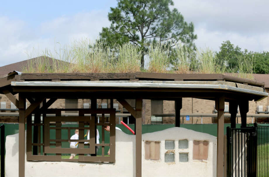 "A ""green roof"" on one of the structures on the grounds of the Monarch School."