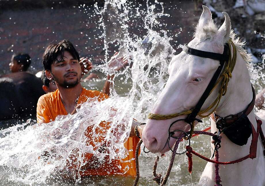 A scorcher on the subcontinent:An Indian man splashes his horse to cool off the animal in a canal in Jalandhar. Central and northern India were suffering through 113-degree heat ahead of the summer monsoon rains. Photo: Shammi Mehra, AFP/Getty Images