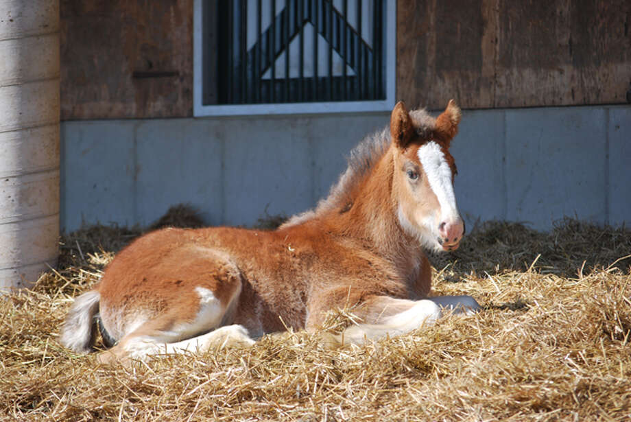 The month-old foal featured in this year's Super Bowl commercial was named Hope following a contest  announced at the end of the commercial.
