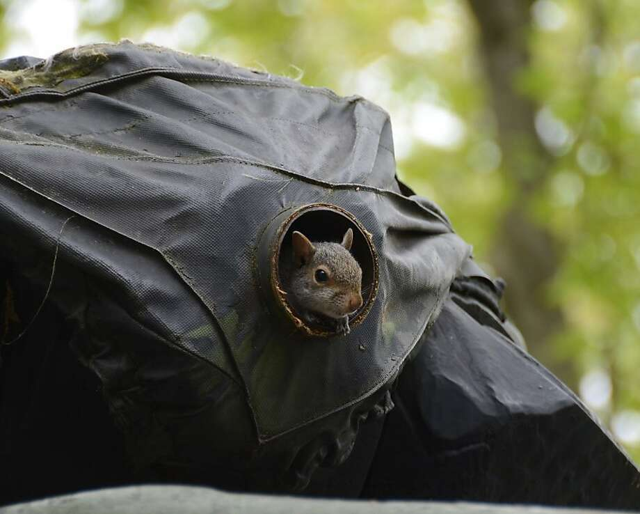 Common squirrel soon to become flying squirrel: That is, if the veterans of greater Hazleton, Pa., fire this tank turret gun in a Memorial Day salute. Photo: Eric Conover, Associated Press