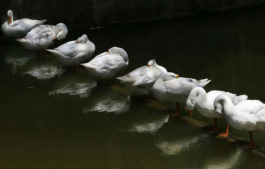 All your ducks in a row? Then have a great holiday weekend! DIP will return Tuesday. (Geese in New Delhi.) Photo: Saurabh Das, Associated Press