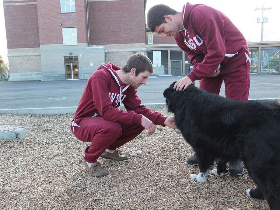 If a WSU student is going to associate with a dog, it oughta be this kind.